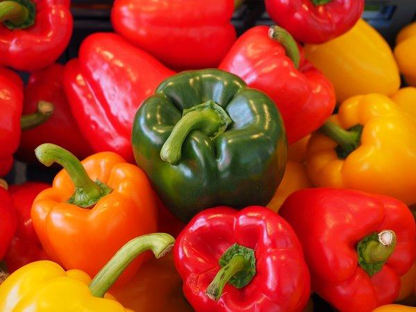 shop exotic-samen paprika gemüsepaprika blockpaprika
